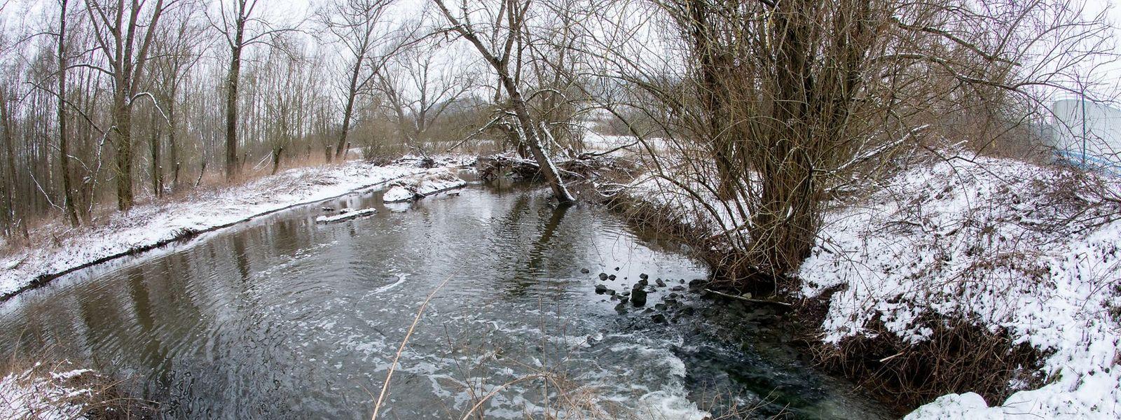 Von einem Sprung in die Korn ist derzeit nicht nur wegen der Kälte abzuraten. Der Zustand des Gewässers ist so, dass es untersagt ist, darin zu baden.