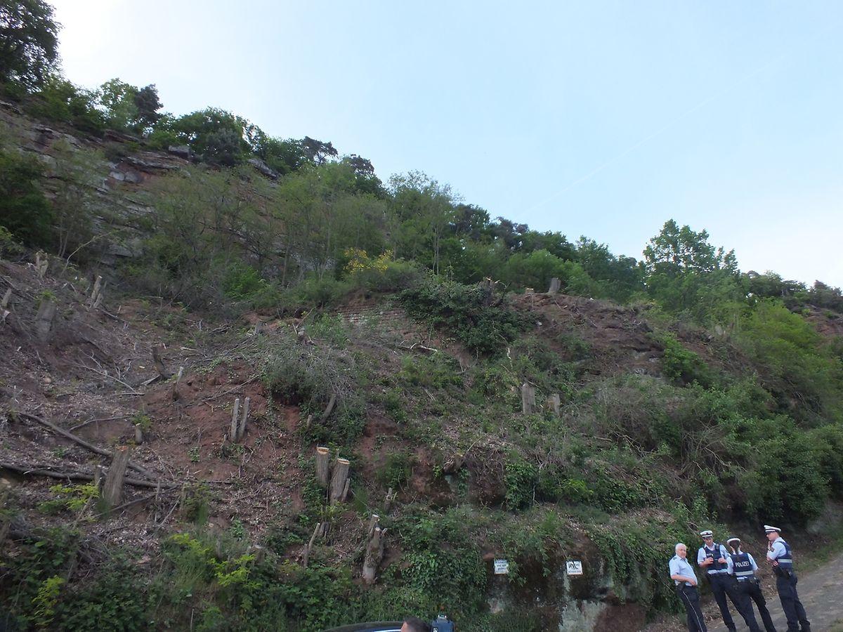 Die Knochenteile wurden bei Rodungsarbeiten an einem Hang in Trier-Pallien gefunden.