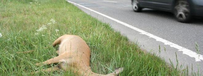 Wer einen Unfall mit einem Wildtier hat, sollte anhalten und die Unfallstelle absichern.