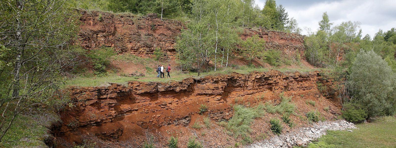 Die Naturreservate in den früheren Tagebaugebieten könnten die Kernzonen eines zukünftigen Biosphärenreservates bilden.