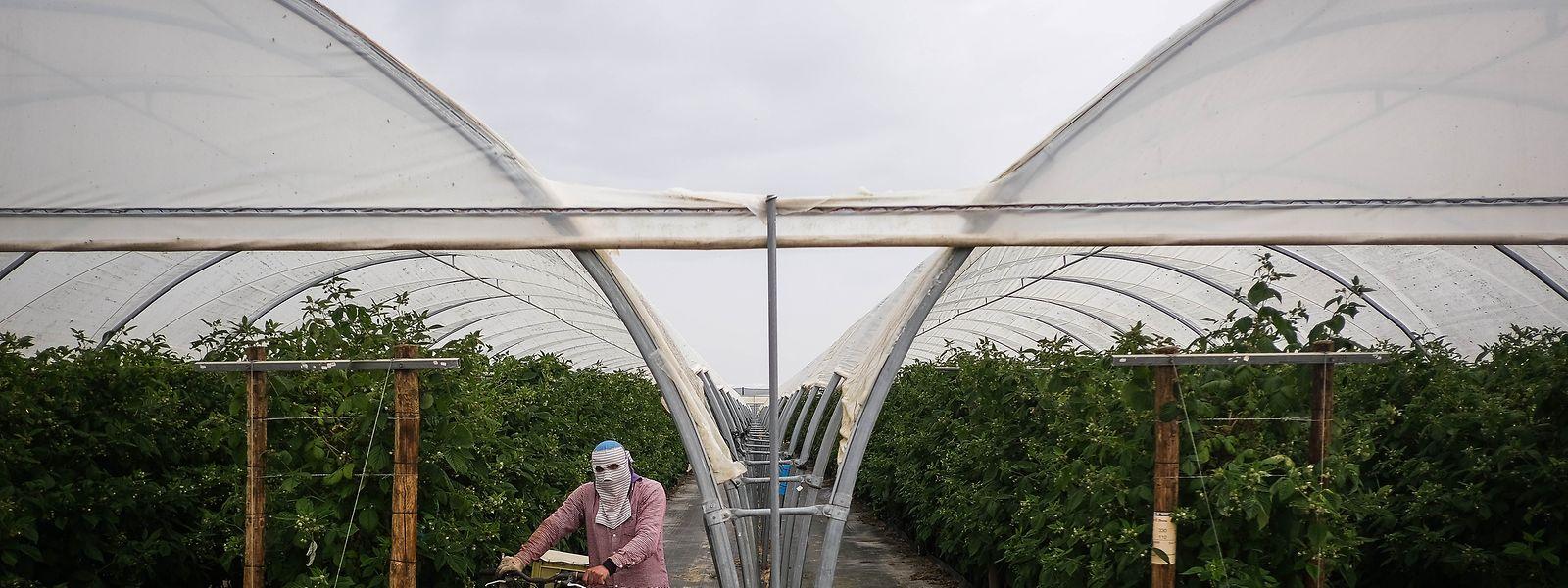Explorações agrícolas no Alentejo.