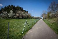 Lokales - Schutzzaun gegen Wildschweine -  Linger - - Foto: Pierre Matgé/Luxemburger Wort