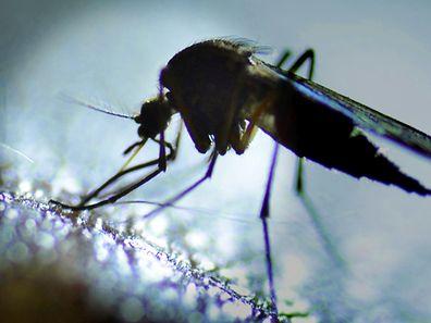 L'épidémie de Zika a été officiellement déclarée vendredi en Guadeloupe où près de 2 100 malades ont été recensés.