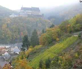 Weinberg in Vianden
