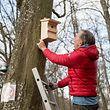 Insgesamt 20 Kohlmeisen-Nistkästen hängt Gilles Franck, der Betreiber des Düdelinger Kletterparks Lé'h, auf den Bäumen im Park auf. Die Kohlmeise gilt als natürlicher Feind des Eichenprozessionsspinners.