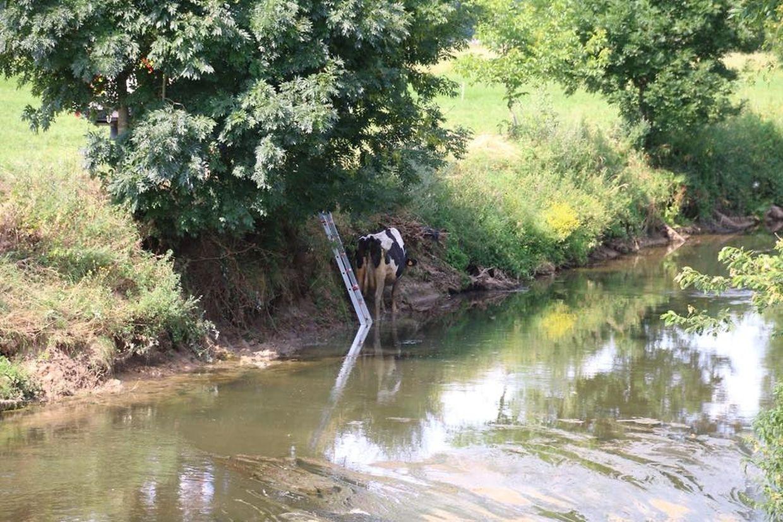 Aus dem Wasser wieder an Land: Die Einsatzkräfte konnten die Kuh aus ihrer Lage befreien.