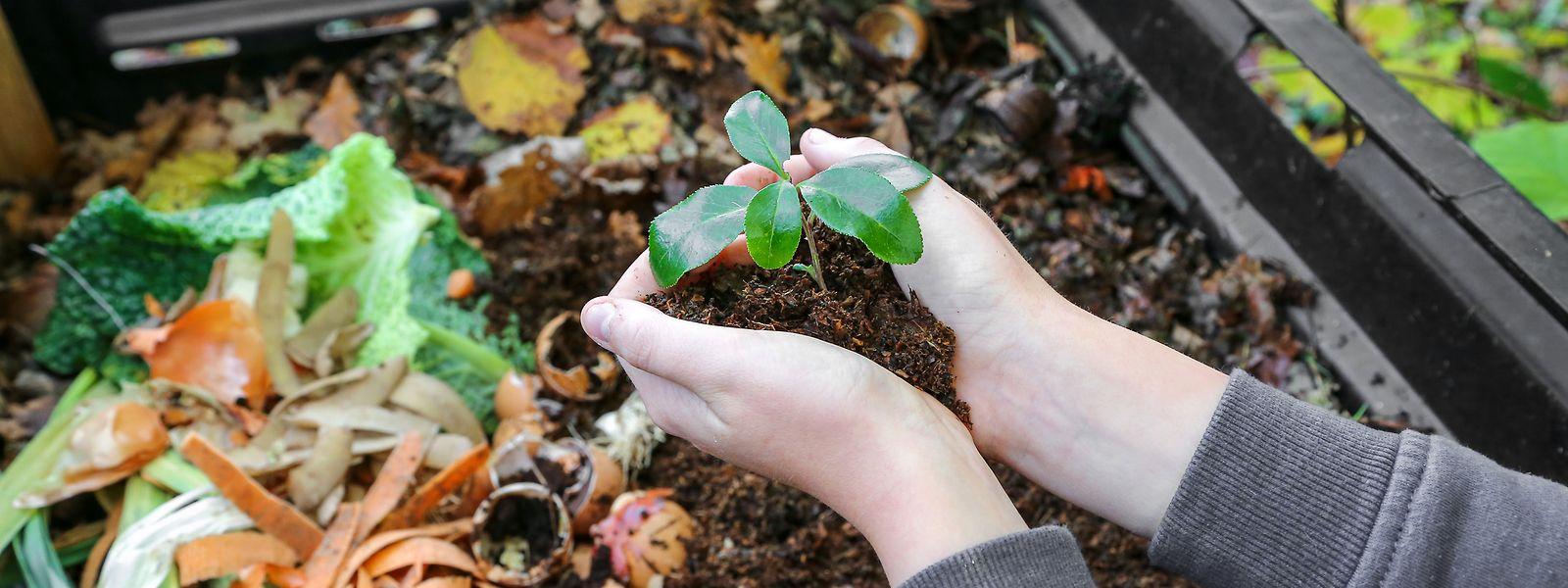 Manche Dinge – wie etwa Rasenschnitt – gehören nicht auf den Kompost.