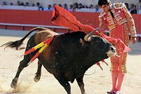 Spanish matador Miguel Angel Perera makes a muleta pass on a Domingo Hernandez's fighting bull on June 01, 2009 in the French southern town of Nimes, during the Nimes Feria Bullfighting Festival<br /> AFP PHOTO / PASCAL GUYOT