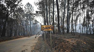 Die Brandkatastrophe im Nordosten von Portugal sorgte für eine Welle der Hilfsbereitschaft.