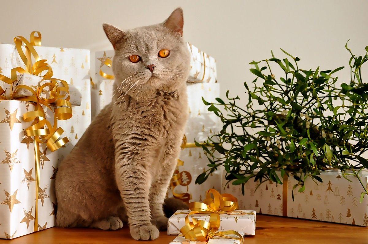 Geschenkbänder und Katzen: Eine schlechte Kombination.