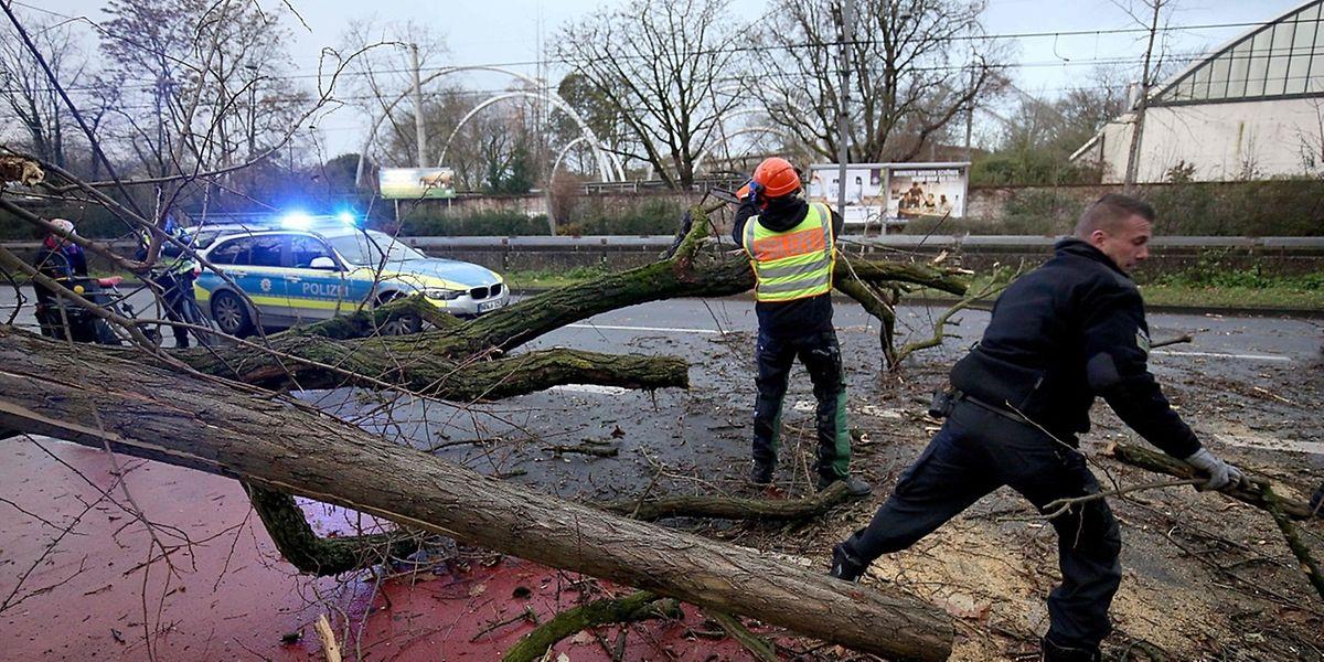 Wie hier in Köln galt es vielerorts, umgestürzte Bäume aus dem Weg zu räumen.