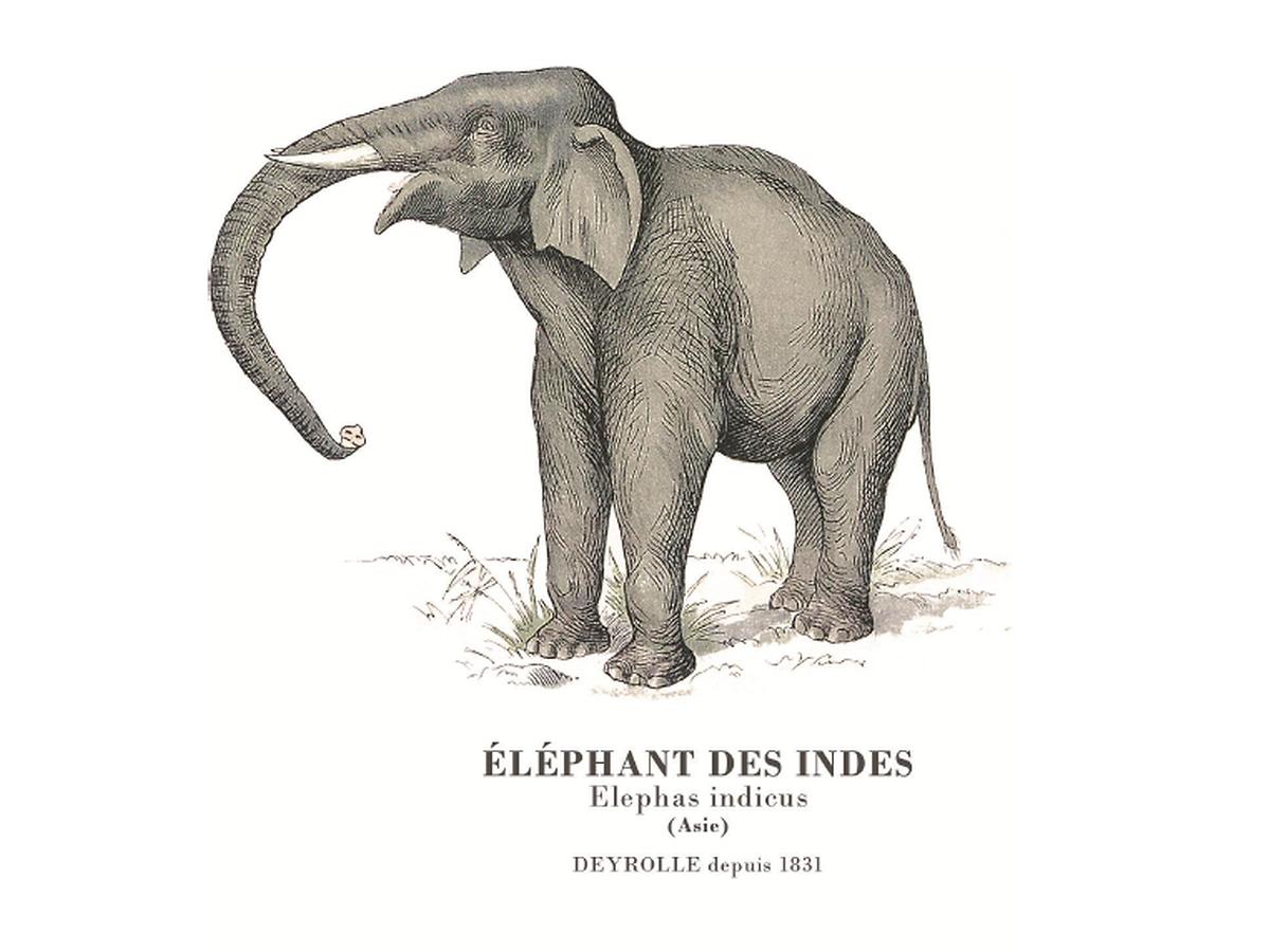 Historische Zeichnungen aus den Archiven von Deyrolle wurden als Motive für die Sonderkollektion von Petit Bateau ausgewählt.
