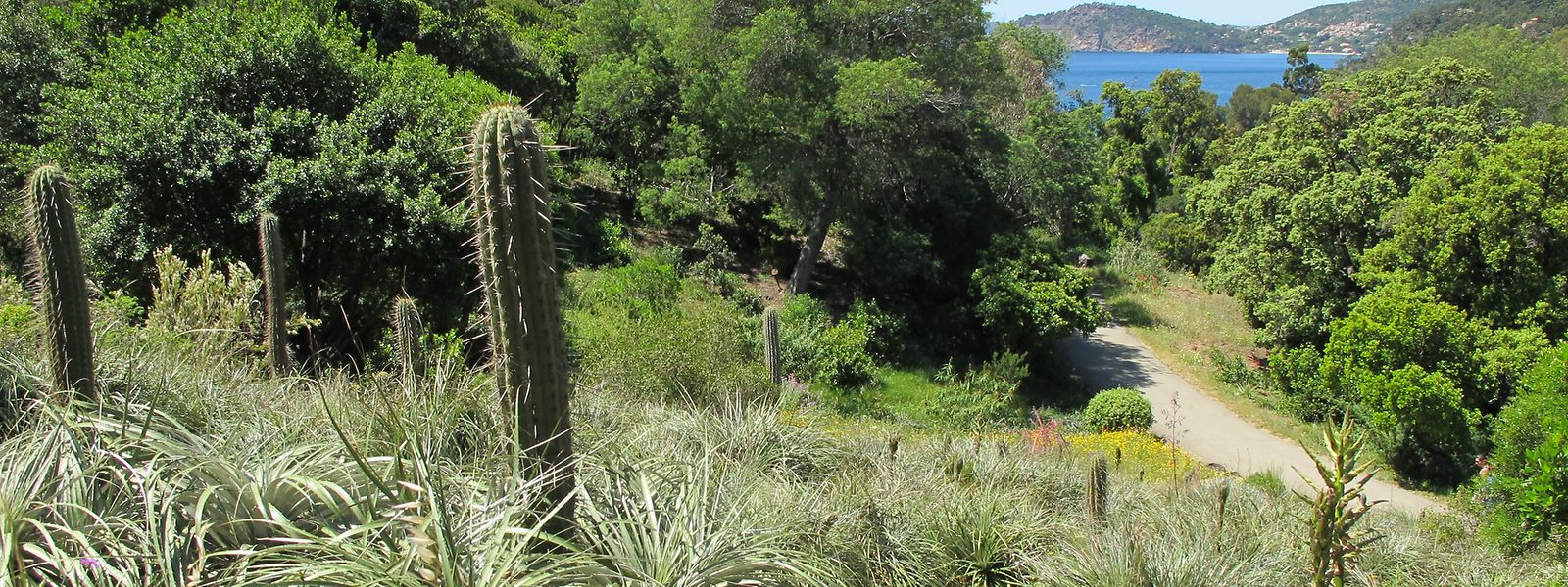 """Südamerikanische Vegetation vor mediterraner Kulisse: Ein Spaziergang durch den """"Jardin du Chili"""" bietet Eindrücke unterschiedlicher Art."""