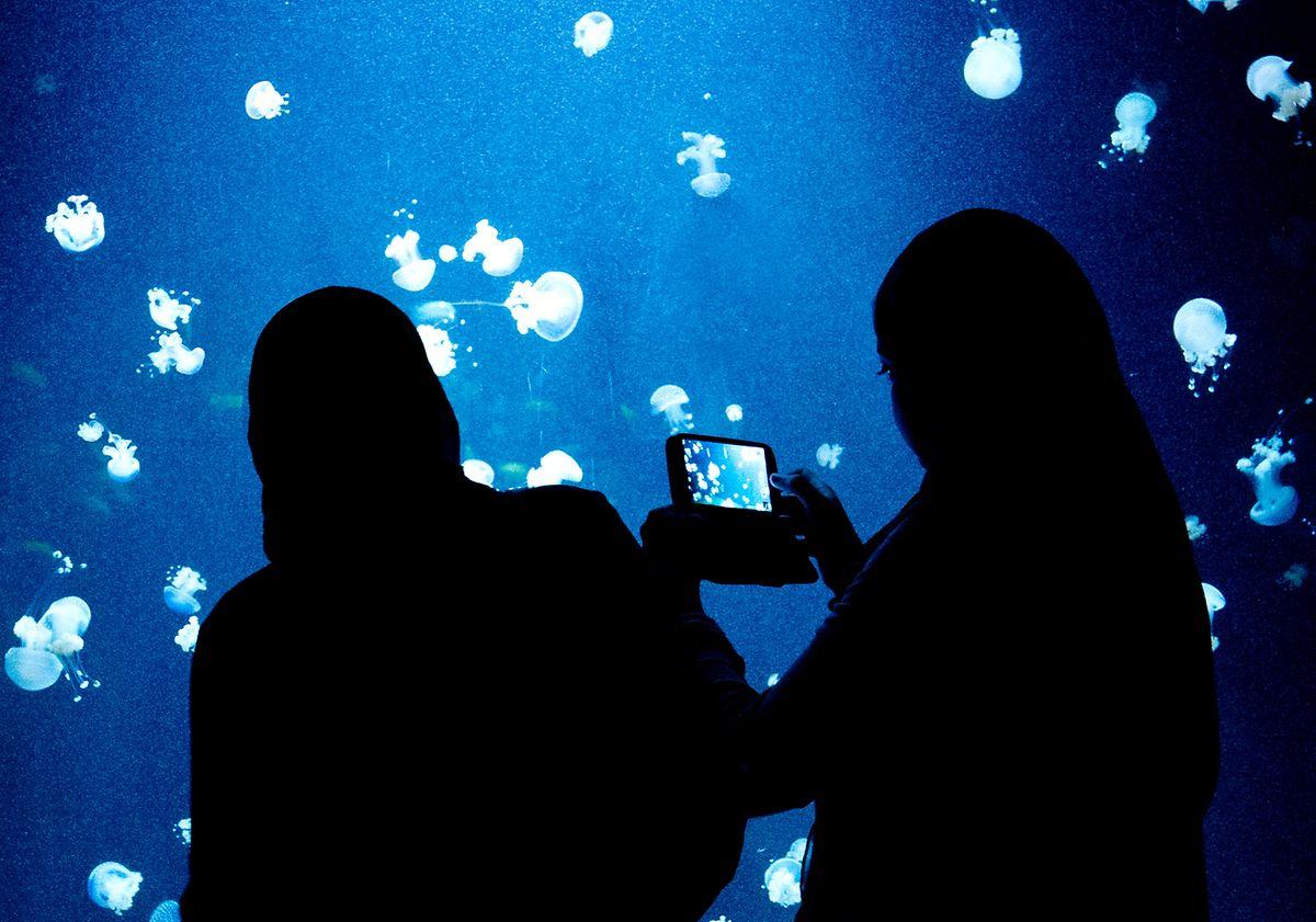 Wer schöne Fotos mit seinem Handy schießen will, der muss vor allem auf die korrekte Beleuchtung achten.