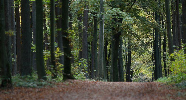 38 Prozent der Waldbäume sind in einem schlechten Zustand. Grund ist der Klimawandel in Kombination mit Luftverschmutzung.