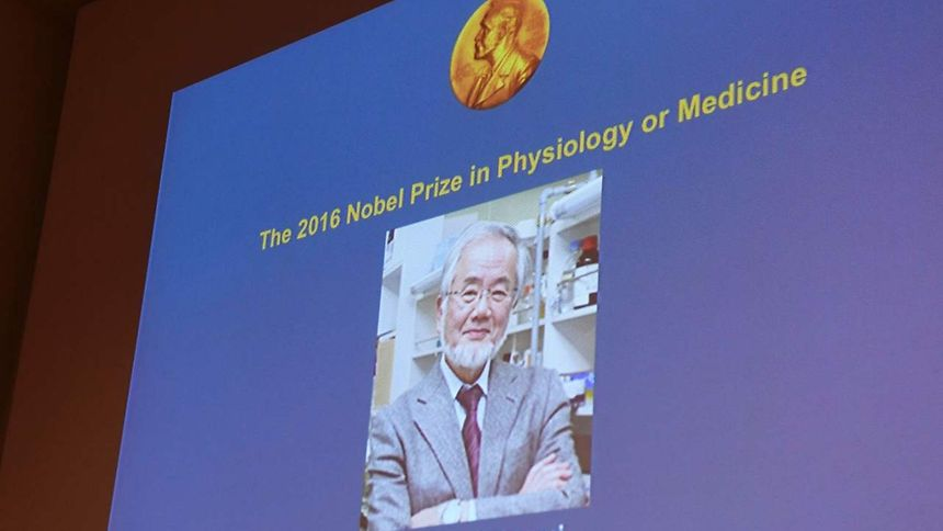 Der Mediziner Yoshinori Ohsumi wurde als erster Nobelpreisträger des Jahres bekannt gegeben.
