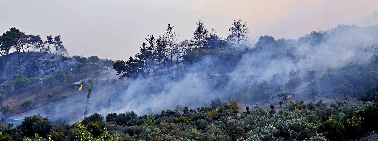 Auch Waldbrände werden zu den wetterbedingten Naturkatastrophen gezählt.