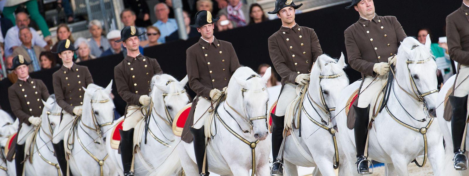 Lipizzaner mit Reiter, aufgenommen anlässlich der Vorpremiere zur Jubiläumsvorstellung 450 Jahre Spanische Hofreitschule.