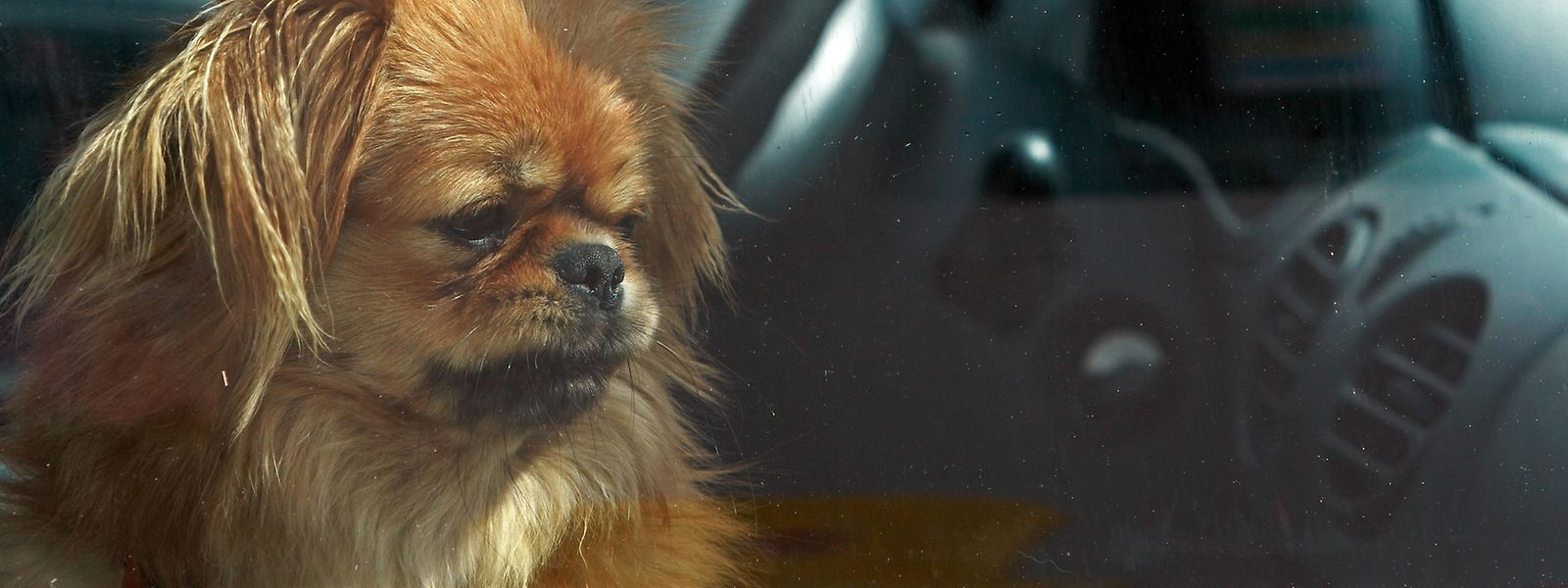 Tiere dürfen nicht in Autos zurückgelassen werden, wenn diese in der Sonne stehen.