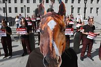 Animal rights activists from PETA stage a die-in outside the Hall of Justice office of Los Angeles District Attorney Jackie Lacey in Los Angeles, California on November 13, 2019, to protest the deaths of 37 racehorses this year at the Santa Anita Park track. (Photo by Mark RALSTON / AFP)