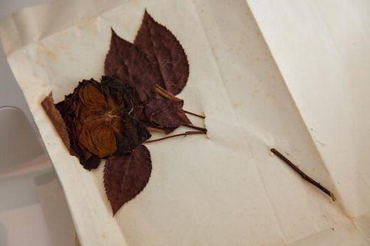A rosa oferecida pelo grão-duque Adolphe em 1891 à mulher do embaixador português foi conservada pela família e regressou agora ao Luxemburgo