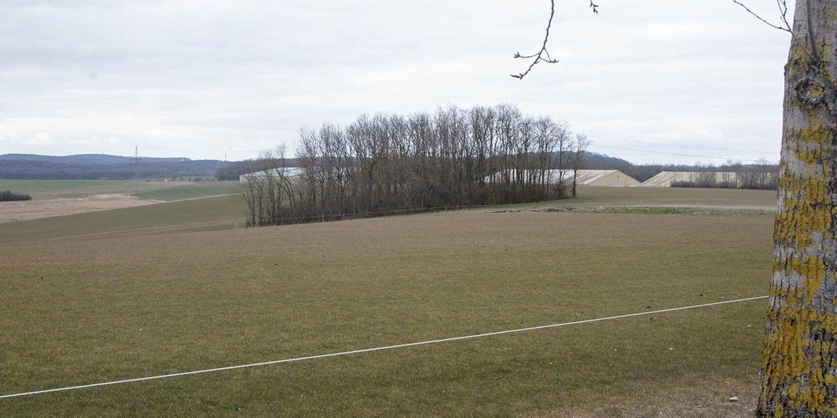 """In dieser natürlichen Mulde bei Sassenheim soll der Bau """"*Ueschterhaff"""" entstehen."""