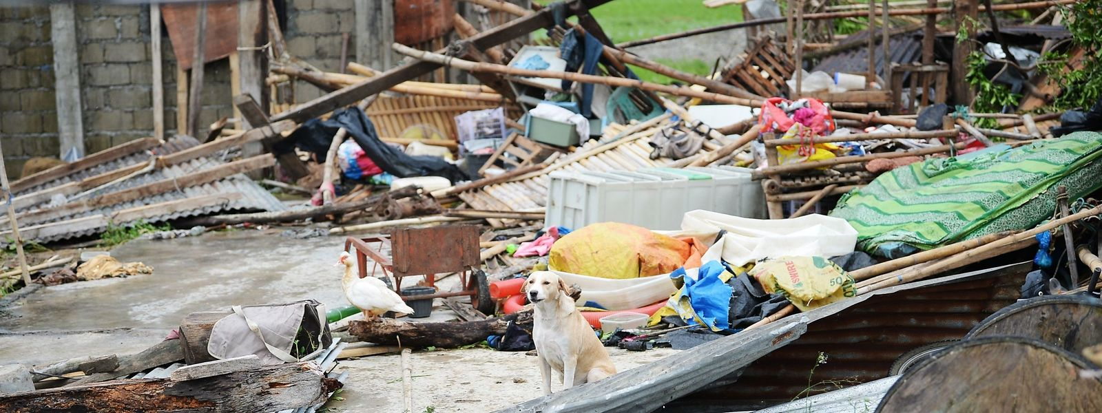 Ein Hund und eine Ente in den Ruinen eines Hauses nach dem Taifun Mangkhut in der Stadt Alcala, Philippinen.
