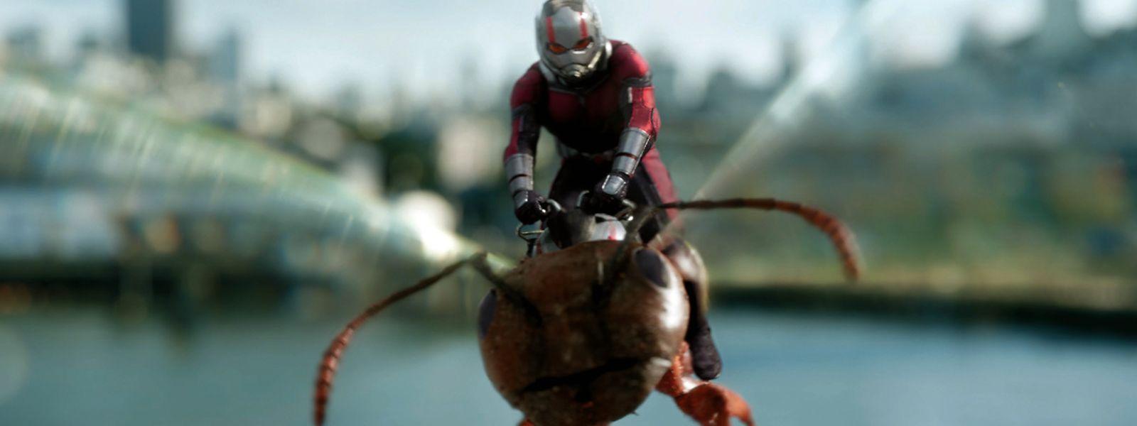 Schauspieler Paul Rudd ist wieder als Ant-Man im zweiten Teil der Marvel-Produktion zu sehen