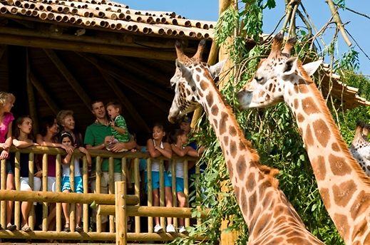 Há girafas e outros animais exóticos à sua espera no parque Bellewaerde