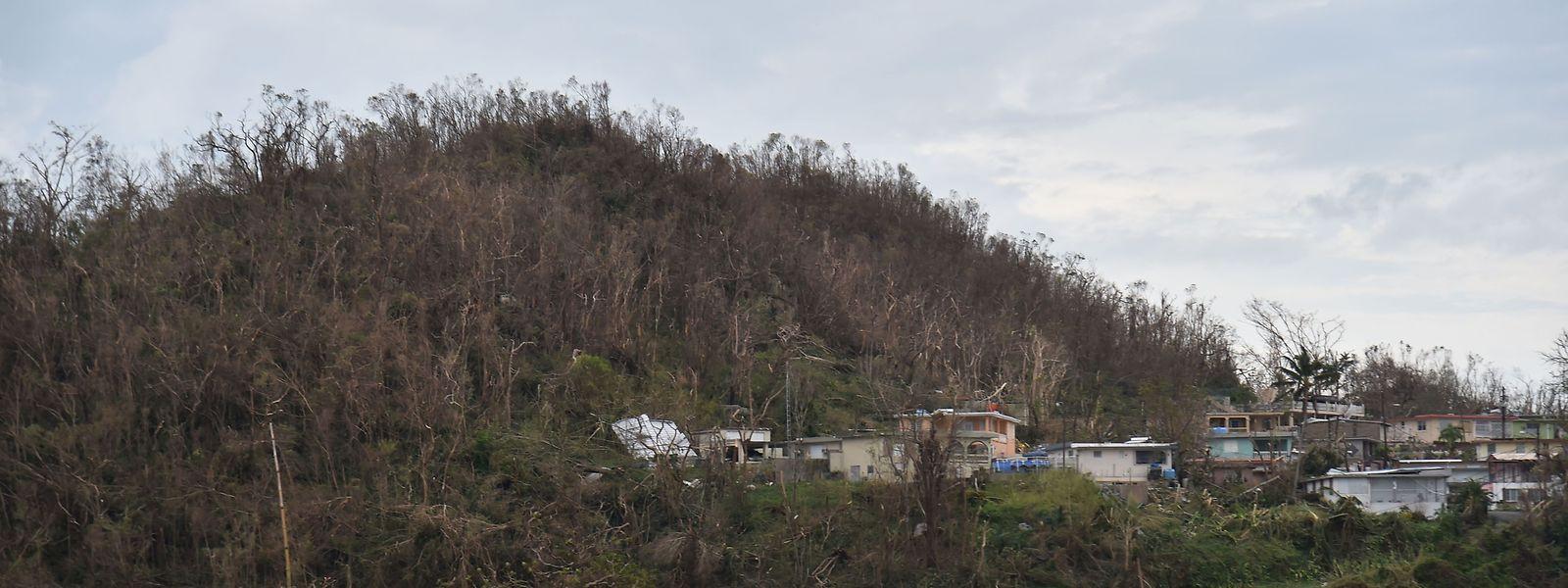 Viele Regionen im US-Außengebiet Puerto Rico sind von der Außenwelt abgeschnitten.