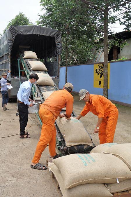 Unter behördlicher Kontrolle werden die Säcke mit dem getrockneten, noch nicht gerösteten Kaffee zum Transport verladen.