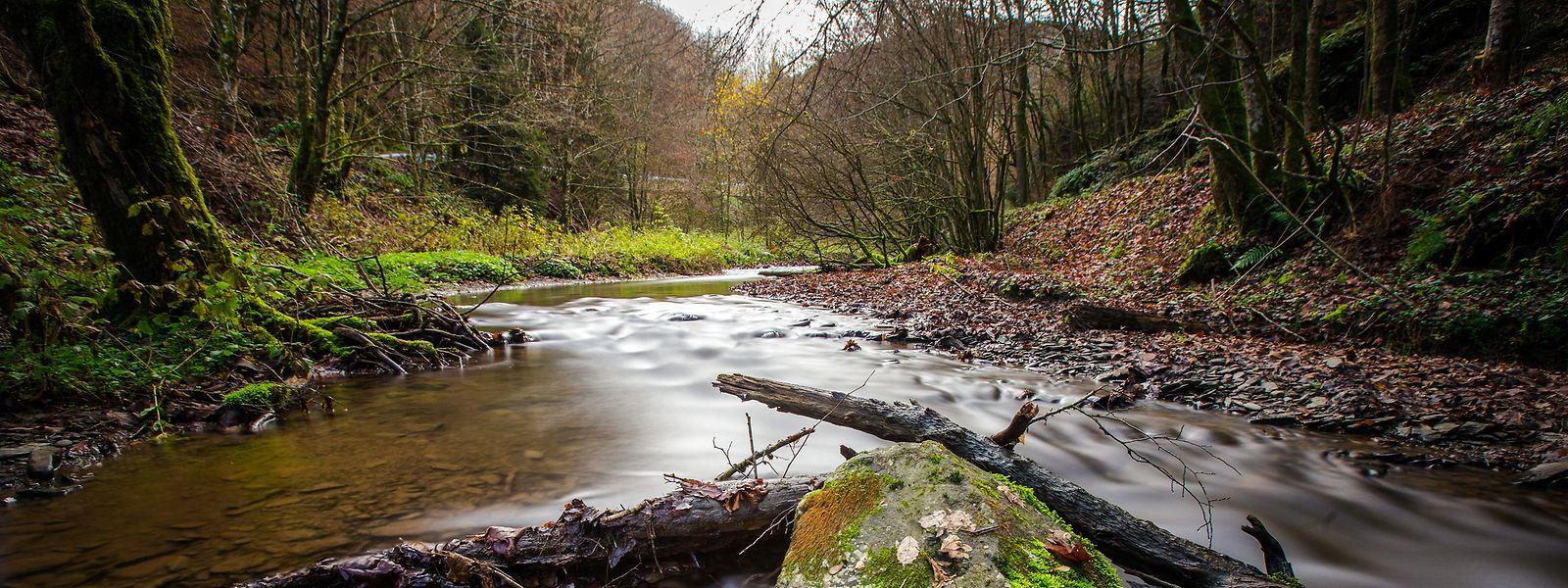 Les cours d'eau du pays sont soumis à des contrôles réguliers pour mieux lutter contre leur pollution.