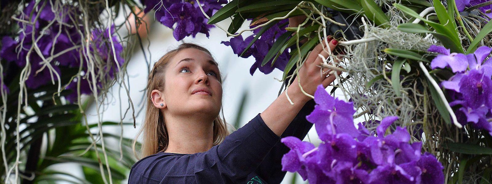 Les horticulteurs, notamment, disposeront de plus d'amplitude horaire pour travailler leurs plants quand la saison l'exige.