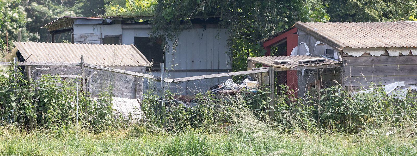 Andris L. lebt seit 2014 im Großherzogtum. 2017 richtet der Obdachlose sich in einer Hütte in einem verlassenen Schrebergarten in Merl ein – dort, wo ein Erdbeersammler aus der Nachbarschaft im Mai 2018 die verwesende Leiche von Attila V. entdeckt.