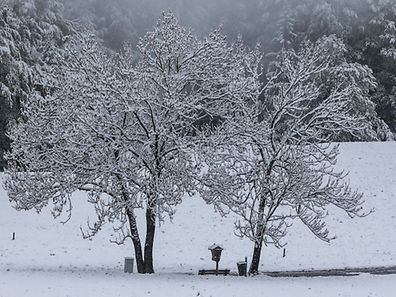 Snow covered trees are pictured in Gnadenwald, Austria, April 27, 2016. REUTERS/Dominic Ebenbichler