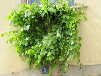 "The ""Meekranz"" is a kind of wreath hung on doors and walls around Luxembourg"