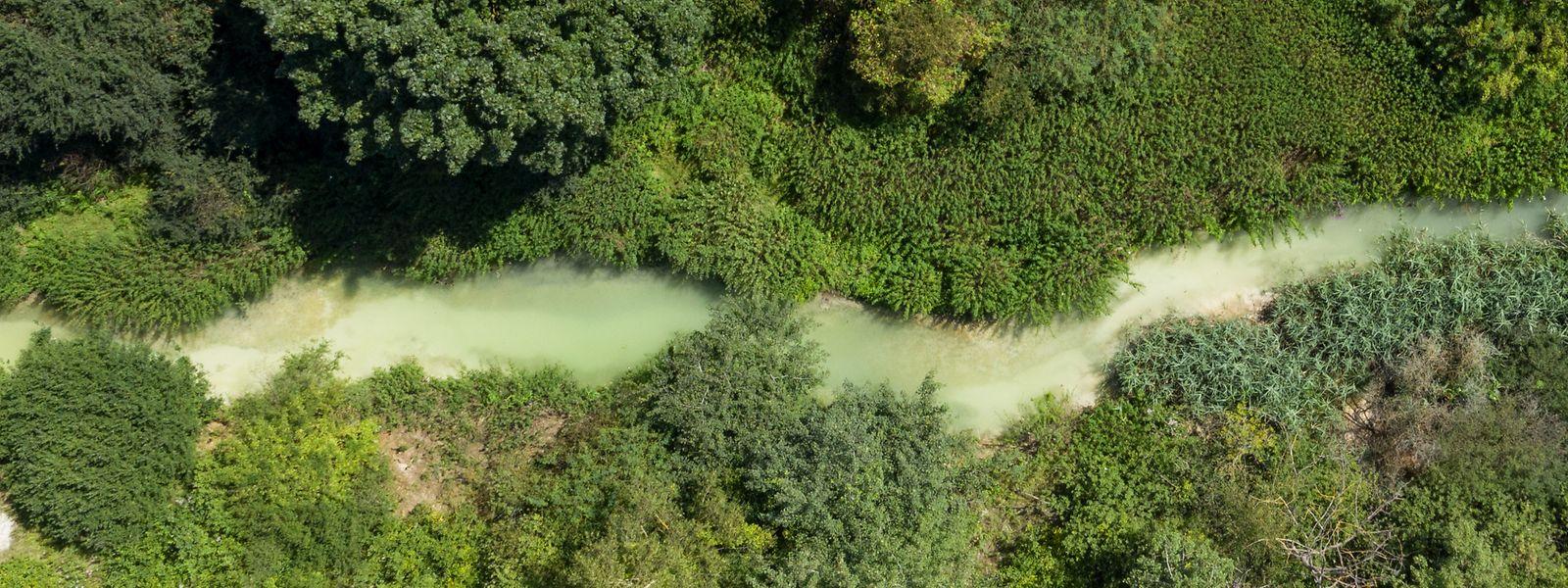 So sah die Korn nach der Verschmutzung durch Löschwasser im Sommer vergangenen Jahres aus.