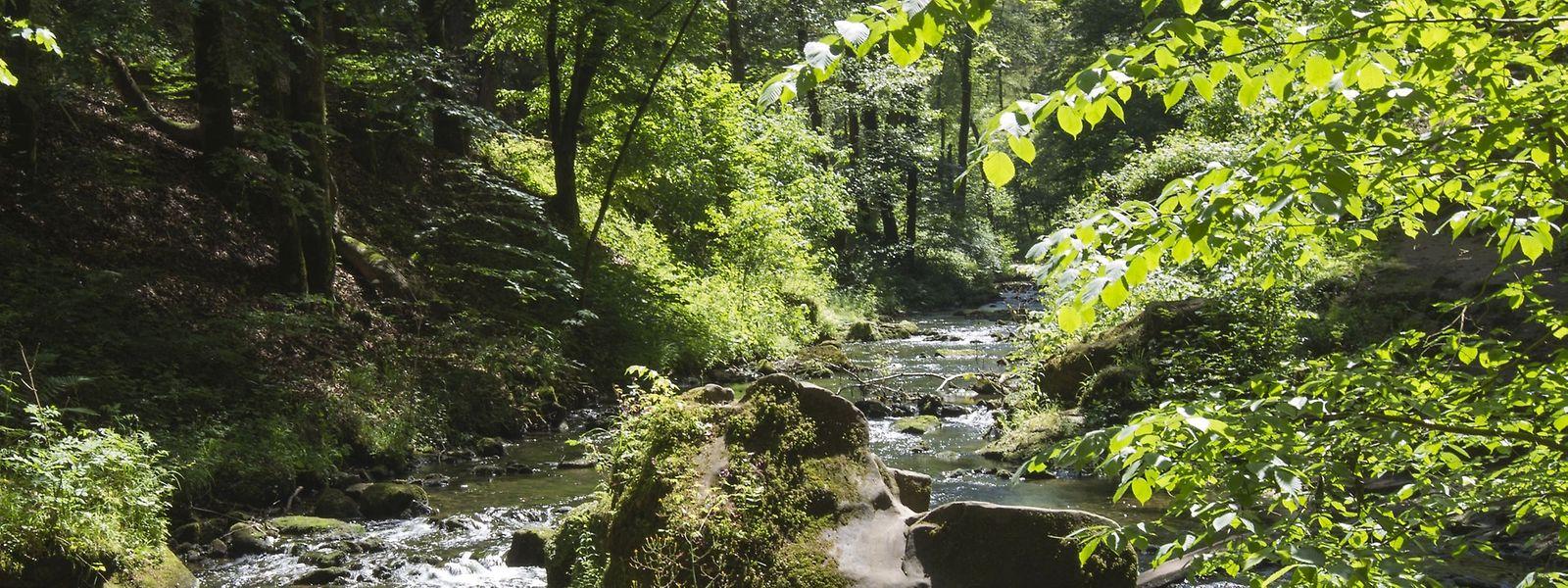 Die Region um das Müllerthal zeichnet sich durch seine besondere Landschaft aus.