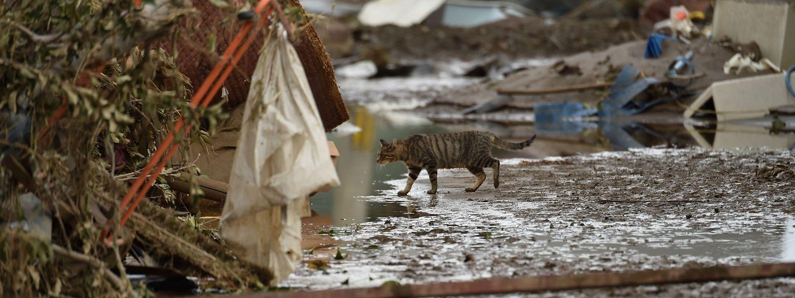 Eine Katze zwischen den Trümmern der Katastrophe.