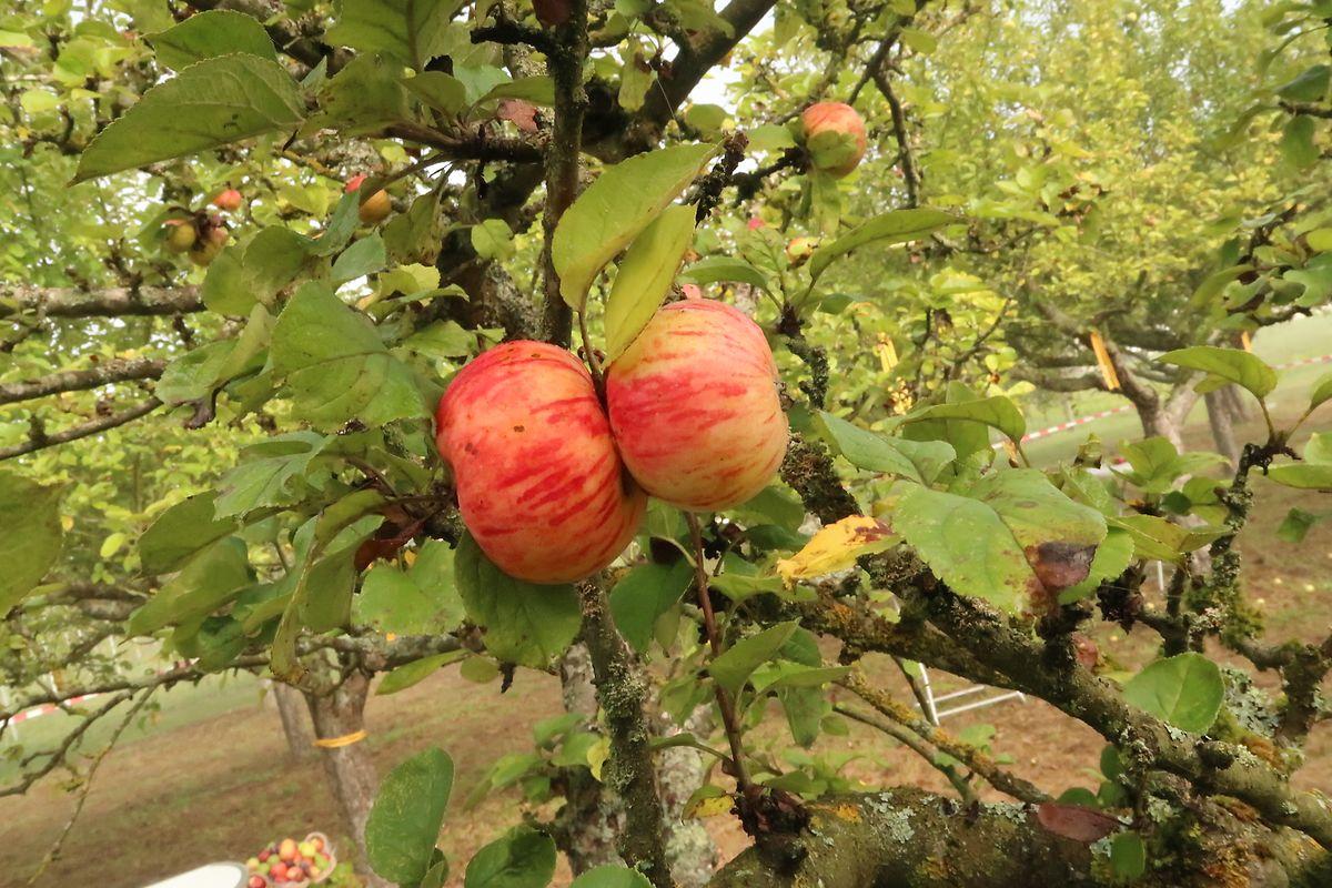 Der Obstgarten in Remich erfreut sich bei den Anwohnern großer Beliebtheit.