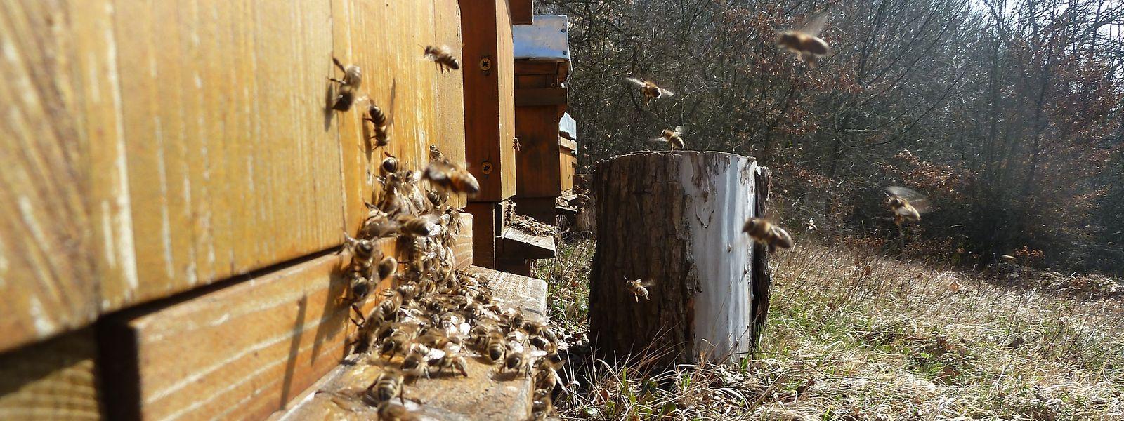 Installer des ruches près de certains monuments, pour parler art ou histoire et environnement, un des six projets finalistes pour diversifier le tourisme de demain.