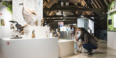 Luxembourg's National Museum of Natural History is one of forty museums that opens its doors for free this weekend for LuMuDays