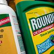 (FILES) This file photo taken on June 15, 2015 shows a bottle of Monsanto's 'Roundup' herbicide in a gardening store in Lille. Around forty NGOs started on February 8, 2017, a civic initiative to achieve the prohibition on glyphosate, the world best seller herbicide, contested for its possible effects on health. / AFP PHOTO / PHILIPPE HUGUEN