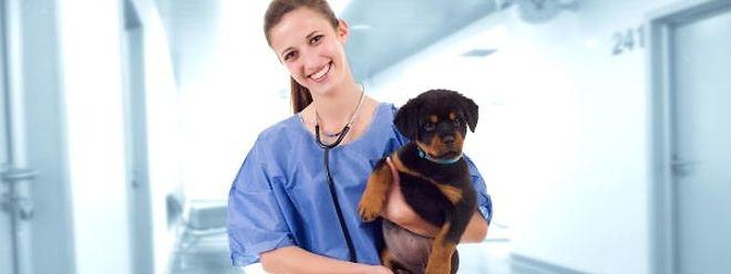 Reinrassig oder nicht? Neben der Rassenzugehörigkeit können mit Gentests für Hunde beispielsweise auch Vaterschaftsfragen geklärt werden.