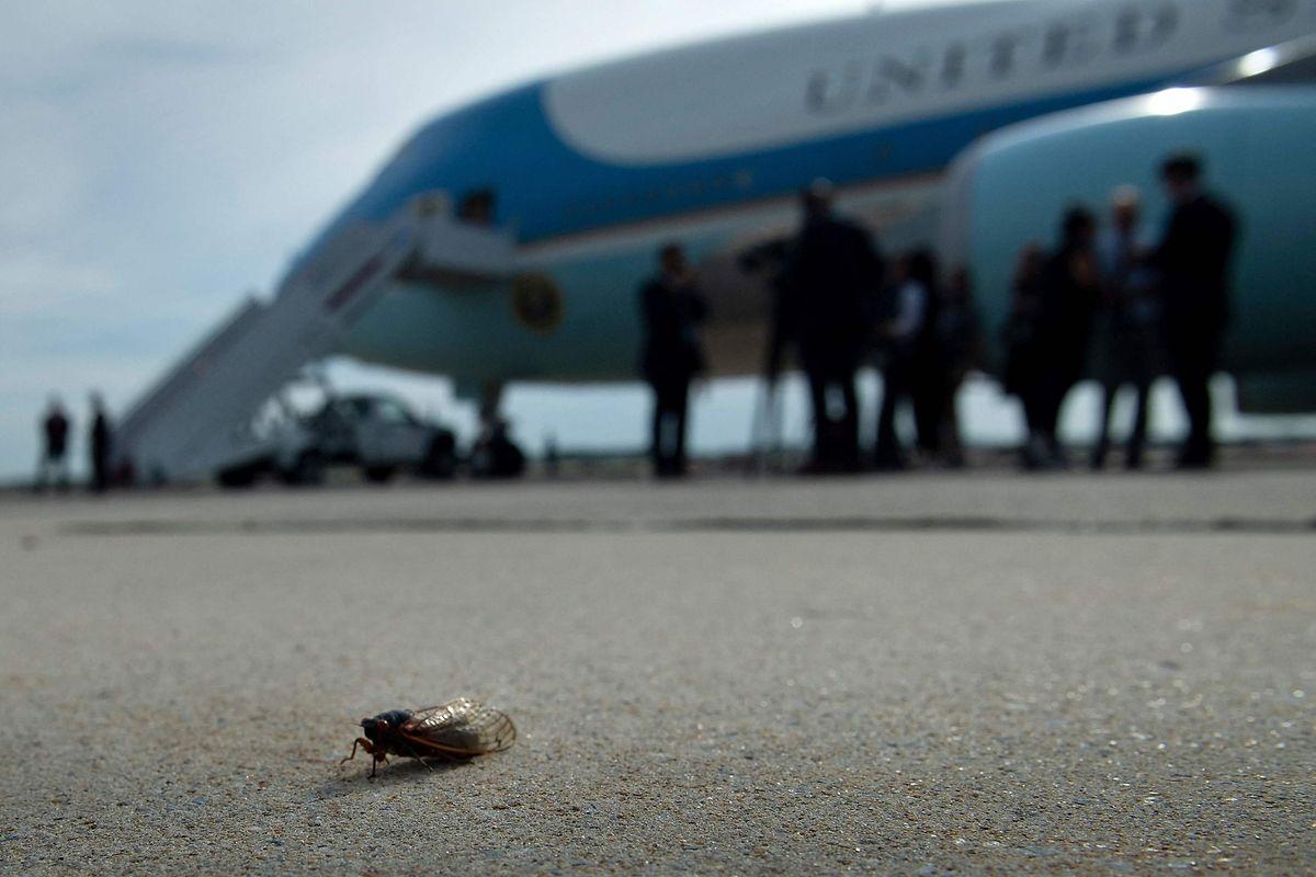 Eine Zikade auf der Startbahn der Andrews Air Force Base. Im Hintergrund die Präsidentenmaschine Air Force One.