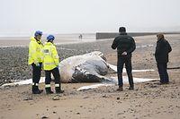 19.03.2021, Großbritannien, Blyth: Mitglieder der Küstenwache stehen um einen Buckelwal, der tot an den Strand gespült wurde. Foto: Owen Humphreys/PA Wire/dpa +++ dpa-Bildfunk +++
