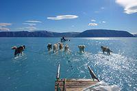 """HANDOUT - 13.06.2019, Grönland, Qaanaaq: Das Bild des Kopenhagener Klimaforschers Steffen M. Olsen vom Dänischen Meteorologischen Institut zeigt, wie acht Hunde einen Schlitten an einem außergewöhnlich warmen Tag über das Meereseis ziehen. Statt des Eises ist jedoch nur noch knöchelhohes Schmelzwasser zu sehen, wodurch es erscheint, als würden dieVierbeiner beinahe über dem Wasser laufen. (zu dpa """"Foto von Schlittenhunden auf dem Grönlandeis geht um die Welt"""") Foto: Steffen M. Olsen/Danmarks Meteorologiske Institut/dpa - ACHTUNG: Nur zur redaktionellen Verwendung im Zusammenhang mit der aktuellen Berichterstattung und nur mit vollständiger Nennung des vorstehenden Credits +++ dpa-Bildfunk +++"""