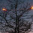 Lokales, Umwelt, Lichtverschmutzung photo Anouk Antony