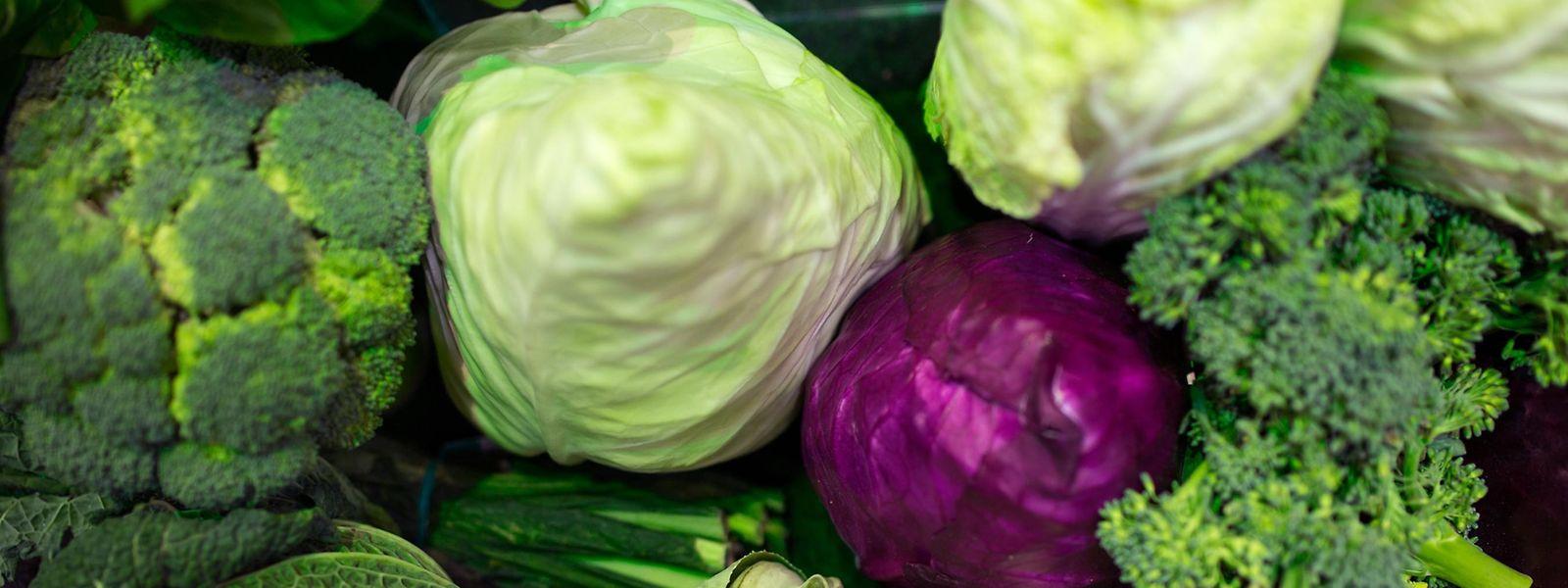 Rotkohl, Weißkohl, Brokkoli: Im Winter wird traditionell Kohl gegessen. Die Sorten schmecken ganz unterschiedlich, sind aber alle sehr gesund.