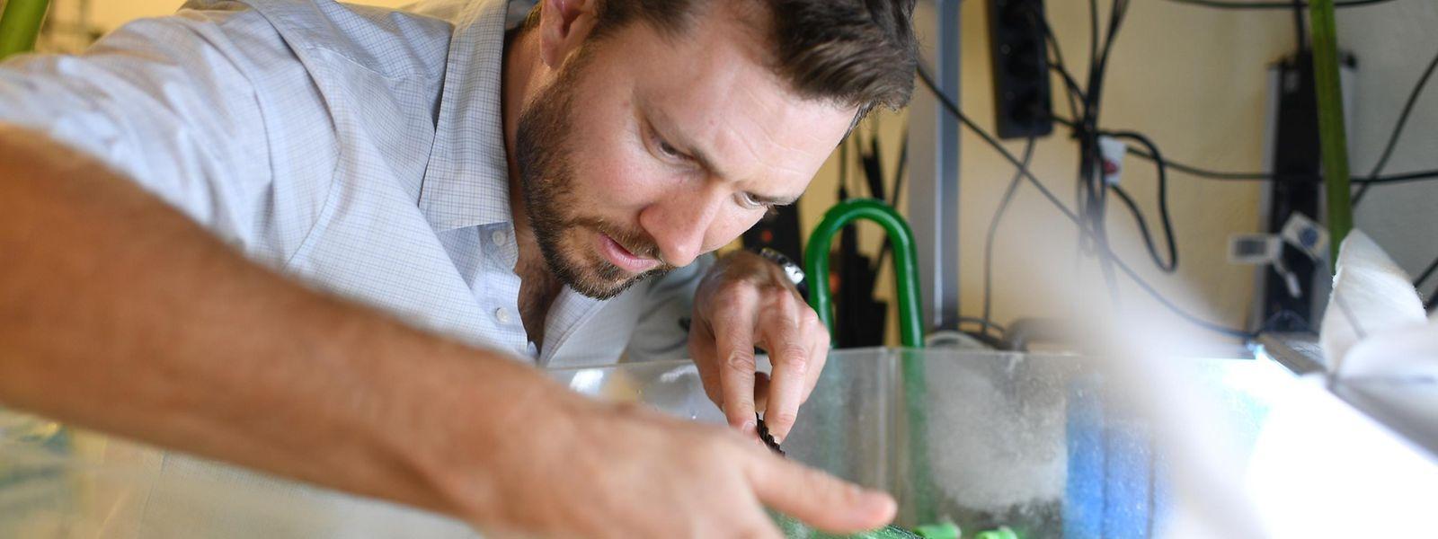 Alex Jordan und sein Team erforschen an der Universität Konstanz das Schwarmverhalten von Buntbarschen.